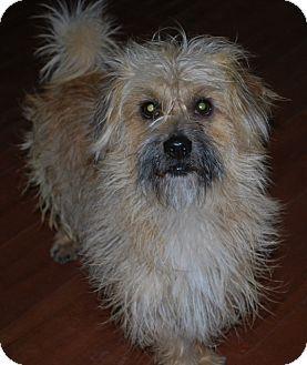 Tibetan Terrier/Terrier (Unknown Type, Small) Mix Dog for adoption in Salt Lake City, Utah - MARCO