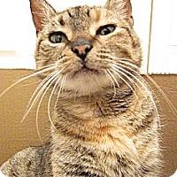 Adopt A Pet :: Stormy - Brooklyn, NY