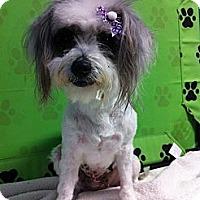 Adopt A Pet :: Chloe - Goleta, CA