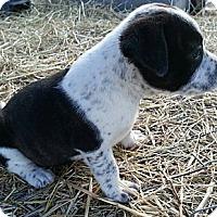 Adopt A Pet :: Mixi - Linton, IN