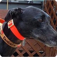 Adopt A Pet :: Dominic - N. BABYLON, NY