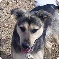 Adopt A Pet :: Holly - YERINGTON, NV