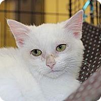 Adopt A Pet :: rosalie - Santa Monica, CA