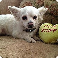 Adopt A Pet :: Poofy - Davie, FL