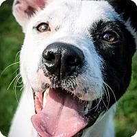 Adopt A Pet :: Stella - Jacksboro, TN