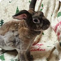 Adopt A Pet :: Darren - Williston, FL