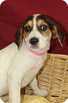 Hound (Unknown Type) Mix Puppy for adoption in Waldorf, Maryland - Heidi
