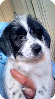 Terrier (Unknown Type, Medium) Mix Puppy for adoption in Kalamazoo, Michigan - Circe