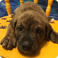 Adopt A Pet :: Fergie#1M - Orlando, FL