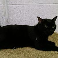 Adopt A Pet :: Romeo - Pineville, NC