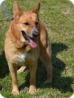 German Shepherd Dog Mix Dog for adoption in Roswell, Georgia - Roma (Guest)