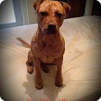 Adopt A Pet :: Sally - West Palm Beach, FL