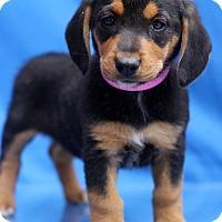 Adopt A Pet :: Leona - Waldorf, MD