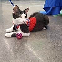 Adopt A Pet :: Oliver - Smyrna, GA
