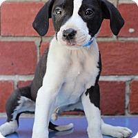 Adopt A Pet :: Crow - Waldorf, MD