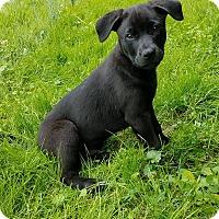 Adopt A Pet :: Pecan - New Oxford, PA