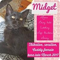 Adopt A Pet :: Midget - McHenry, IL