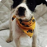 Adopt A Pet :: Wesley - Houston, TX