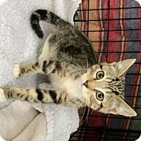 Adopt A Pet :: Macchiato - Evergreen, CO