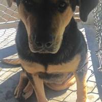 Adopt A Pet :: Kiera - Dublin, GA