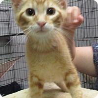 Adopt A Pet :: Skipper - Reeds Spring, MO