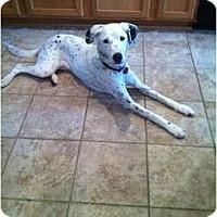 Adopt A Pet :: Julia - League City, TX
