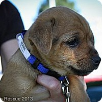 Adopt A Pet :: Bernie - Broomfield, CO