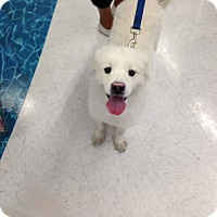 Adopt A Pet :: King - Gilbert, AZ