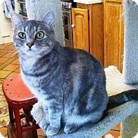 Adopt A Pet :: Fiona - Pasadena, CA