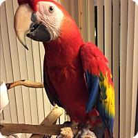 Adopt A Pet :: Fruitloop - St. Louis, MO