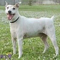 Adopt A Pet :: Sam - Sebastian, FL