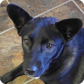 Anatolian Shepherd/Labrador Retriever Mix Dog for adoption in Arenas Valley, New Mexico - Ella