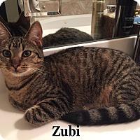 Adopt A Pet :: Zubi - Bentonville, AR