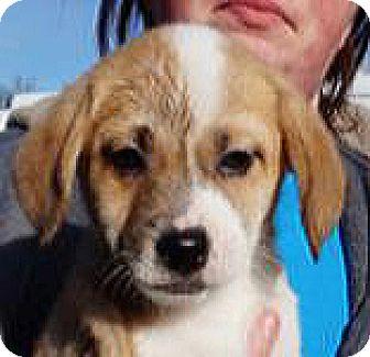 Terrier (Unknown Type, Medium) Mix Puppy for adoption in Spokane, Washington - Marie