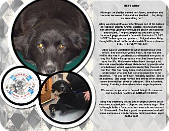 Australian Shepherd/Hound (Unknown Type) Mix Dog for adoption in Mount Holly, New Jersey - Abby