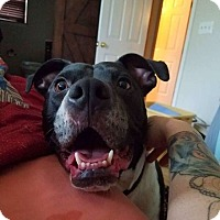 Adopt A Pet :: CHANCE - Lexington, KY