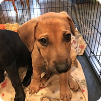 Adopt A Pet :: Zander - Knoxville, TN