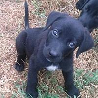 Adopt A Pet :: Jet - Waller, TX