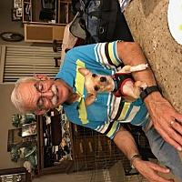 Adopt A Pet :: Rocky - Crestview, FL