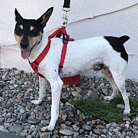 Adopt A Pet :: Cal - Fallbrook, CA
