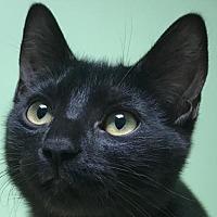 Adopt A Pet :: Grace - Auburn, CA