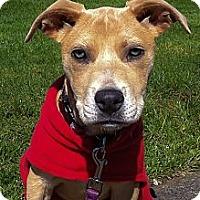 Adopt A Pet :: Darla - Seattle, WA