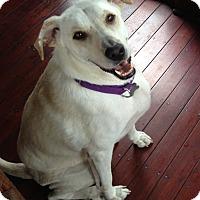 Adopt A Pet :: TJ - White River Junction, VT