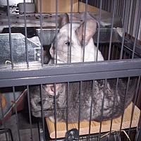 Adopt A Pet :: Coconut & Oreo - Avondale, LA