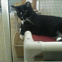 Adopt A Pet :: Herman (Heidi's kid) - Elk Grove, CA