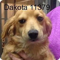 Adopt A Pet :: Dakota - Greencastle, NC