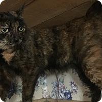 Adopt A Pet :: Lucy - Witter, AR