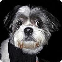 Adopt A Pet :: Joey - Salem, OR