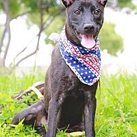 Adopt A Pet :: Dukie - San Mateo, CA