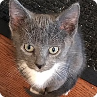 Adopt A Pet :: Gypsy and Grayson - Devon, PA